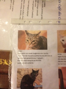 Some of the kitty bios.